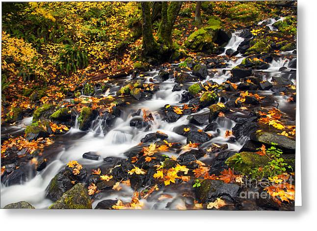 Starvation Greeting Cards - Autumns Staircase Greeting Card by Mike  Dawson