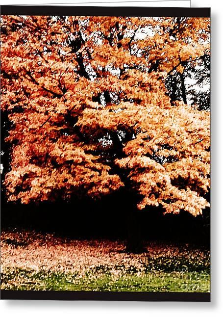 Fall Photos Digital Art Greeting Cards - Autumns Tree Greeting Card by Marsha Heiken