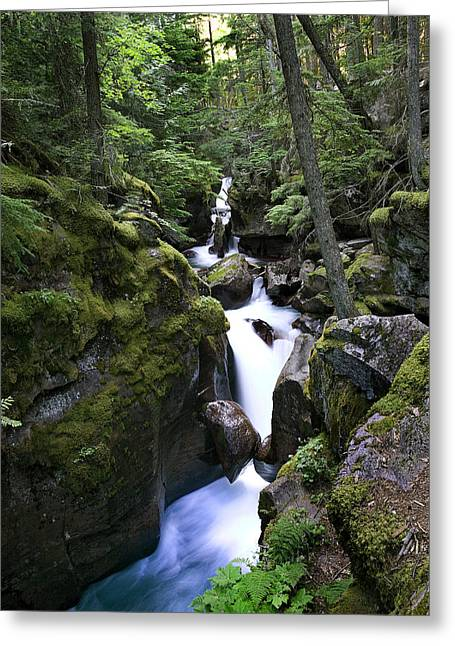 Clean Water Photographs Greeting Cards - Avalanche Gorge Glacier National Park Greeting Card by Rich Franco