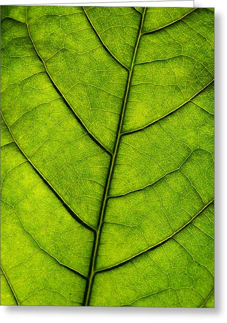 Avocado Green Greeting Cards - Avocado Leaf 1 Greeting Card by Jessica Velasco
