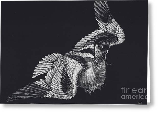 Flying Animal Drawings Greeting Cards - Avocet Greeting Card by Yenni Harrison