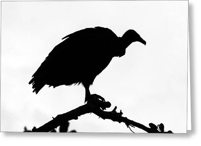 Vulture Silhouettes Greeting Cards - Awaiting death Greeting Card by David Lee Thompson