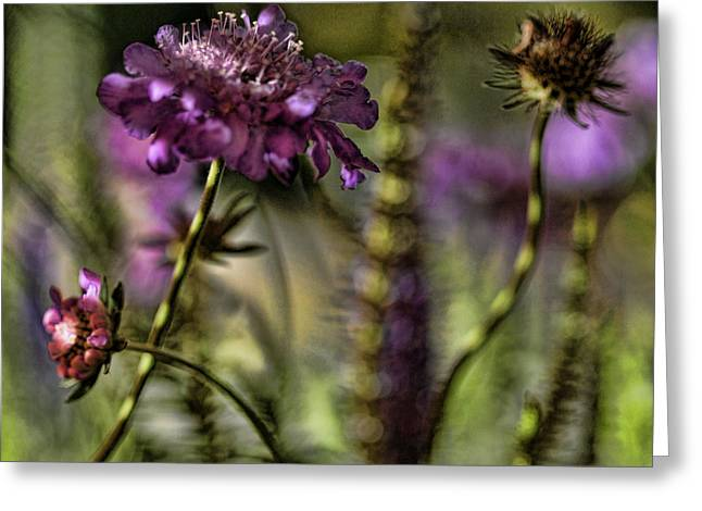 Pinks And Purple Petals Greeting Cards - Awakening Greeting Card by Bonnie Bruno