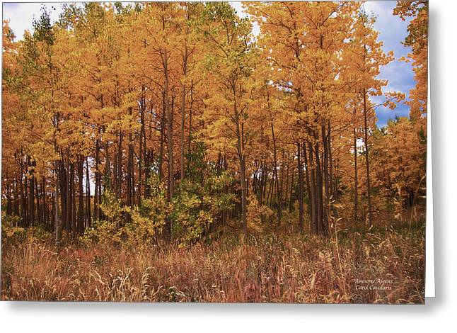 Autumn Landscape Mixed Media Greeting Cards - Awesome Aspens Greeting Card by Carol Cavalaris