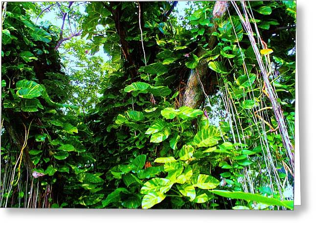 """""""jungle Vines"""" Greeting Cards - Awesome Tree Greeting Card by Anais Matute"""
