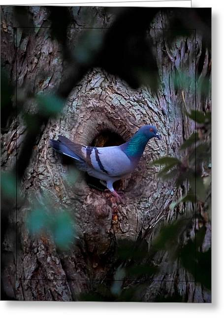 Feral Pigeon Greeting Cards - Awkward Stoop Greeting Card by DigiArt Diaries by Vicky B Fuller