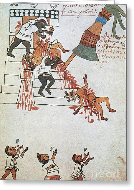 Human Sacrifice Art Greeting Cards - Aztec Human Sacrifice, Codex Tudela Greeting Card by Photo Researchers