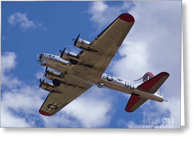 Us Air Force Greeting Cards - B-17G Yankee Lady overhead Greeting Card by Tim Mulina