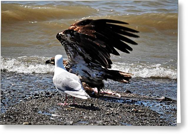 Eagle Images Greeting Cards - Baby Bald Eagle Movement Greeting Card by Debra  Miller