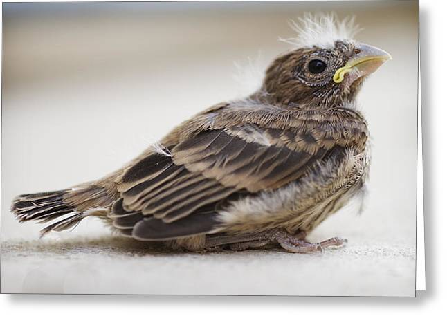 Baby Bird 1 Greeting Card by Jessica Velasco