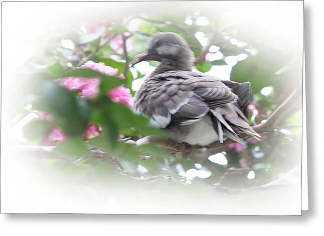 Pink Flower Branch Digital Art Greeting Cards - Baby Bird in Crape Myrtle Tree Greeting Card by Linda Phelps