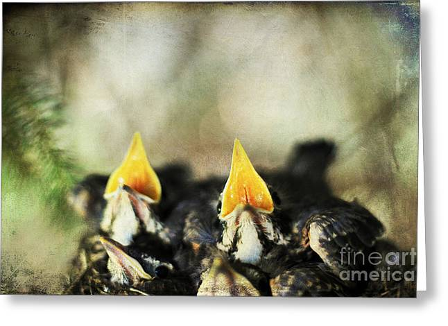 Yearning Greeting Cards - Baby Birds Greeting Card by Darren Fisher