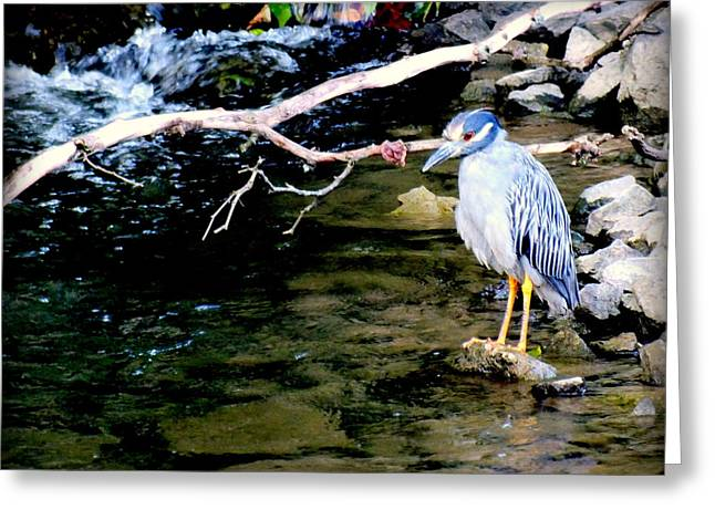Large Birds Greeting Cards - Baby Blue Greeting Card by Karen Wiles