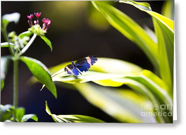 Leda Photography Greeting Cards - Baby Blue Greeting Card by Leslie Leda