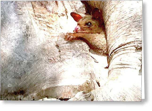 Baby Brushtail Possum 2 Greeting Card by Darren Stein