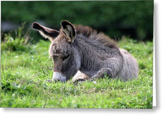 Baby Donkey Greeting Card by Deborah  Smith