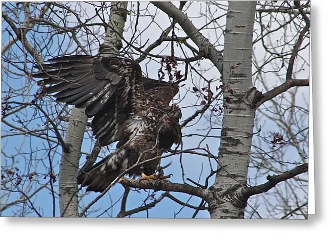 Baby Bird Greeting Cards - Baby Eagle Peek-a-boo Greeting Card by Nancy TeWinkel Lauren