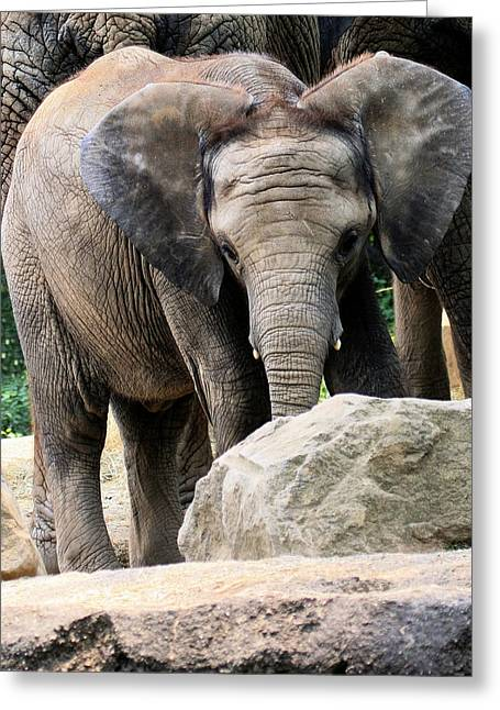 Elephant In The Room Greeting Cards - Baby Elephant Greeting Card by Angela Rath