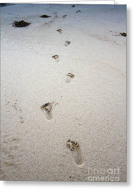 Foot-print Greeting Cards - Baby Footprints In The Sand Greeting Card by Dustin K Ryan