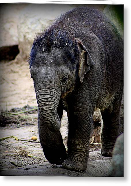 """animal Photographs"" Greeting Cards - Baby Mali - 2 Greeting Card by Tam Graff"