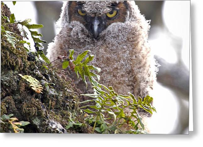 Baby Owl Greeting Card by Athena Mckinzie