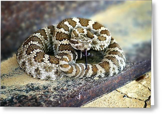 Rattle Snake Greeting Cards - Baby Rattle Greeting Card by Anthony Jones
