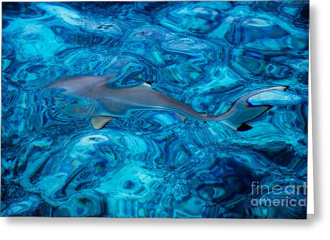 Jenny Rainbow Photographs Greeting Cards - Baby Shark in the Turquoise Water. Production by Nature Greeting Card by Jenny Rainbow