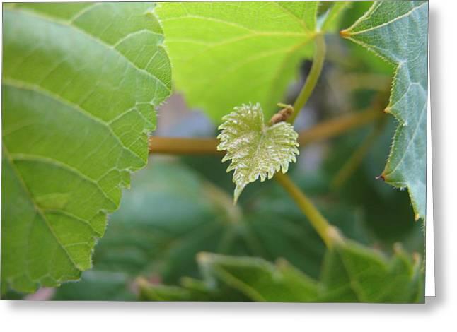 Vine Leaves Greeting Cards - Baby Vine Greeting Card by Lindie Racz