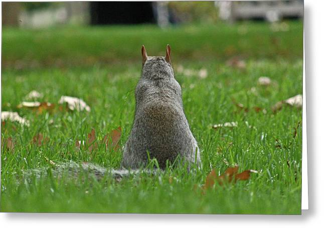Phillies Photographs Greeting Cards - Back of a Squirrel Greeting Card by Ruthanne Fullerton