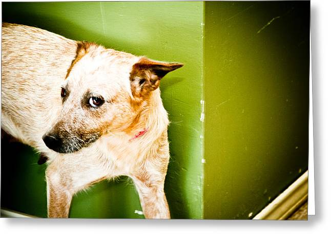 Guard Dog Greeting Cards - Back off  Greeting Card by Toni Hopper