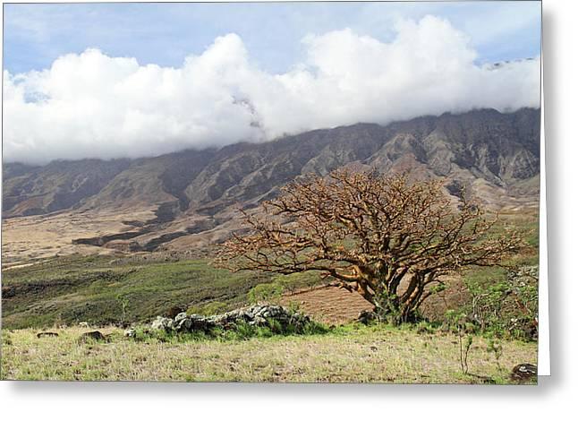 Haleakala Maui Greeting Cards - Back side of Haleakala Maui Greeting Card by Pierre Leclerc Photography