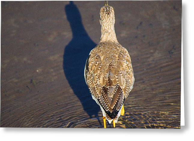 Wildlife Genre Greeting Cards - Back Side Greeting Card by Roena King