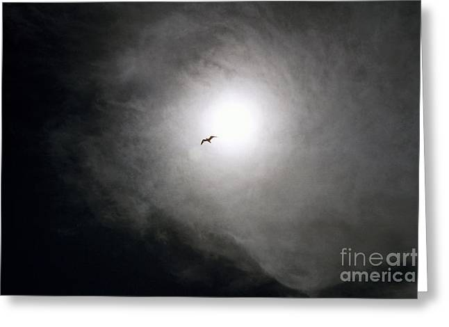Sea Birds Digital Art Greeting Cards - Back to Heaven Greeting Card by Julian Bralley