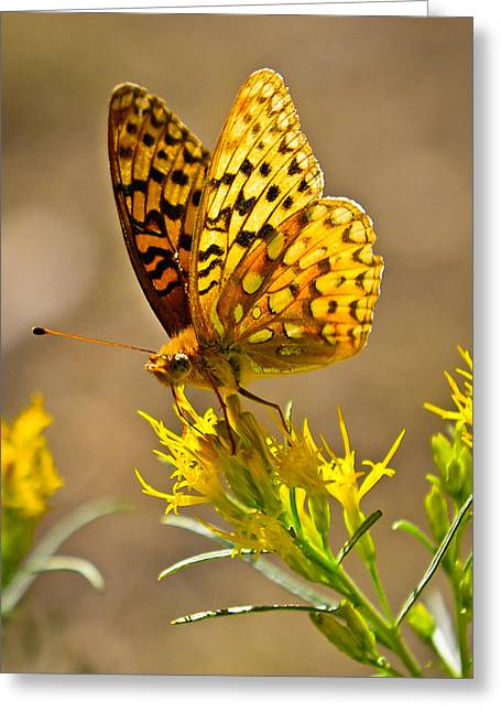 Yellowstone Greeting Cards - Backcountry Butterfly Greeting Card by Greg Norrell