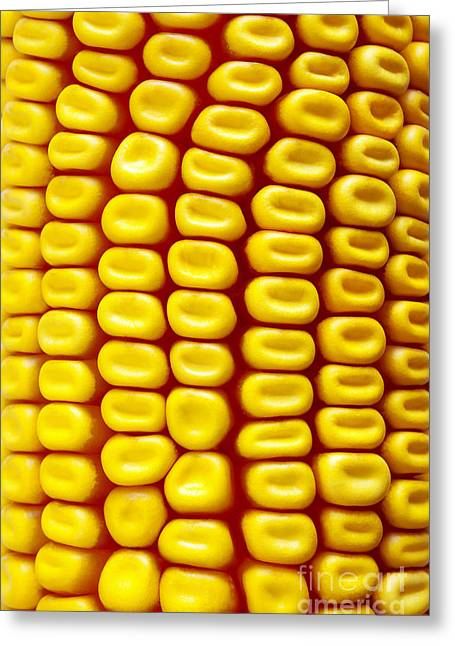 Vegetables Greeting Cards - Background Corn Greeting Card by Carlos Caetano