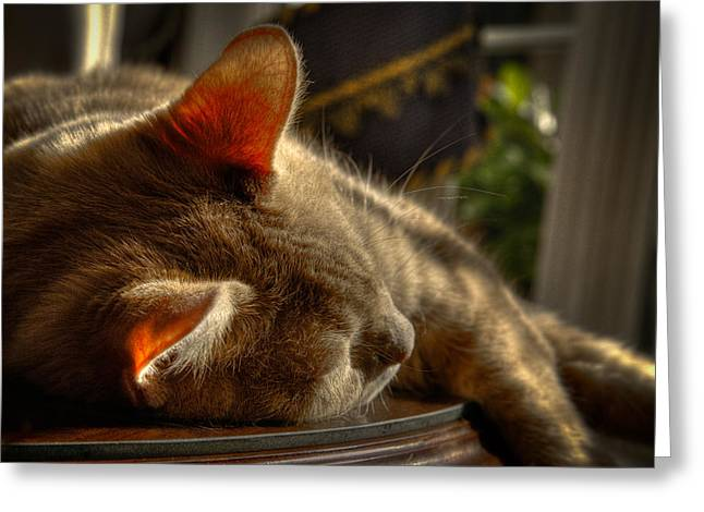 Napping Cat Greeting Cards - Backlit Ears Greeting Card by David Patterson