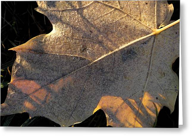 Autum Abstract Greeting Cards - Backlit Frosty Maple Leaf 2 WC  Greeting Card by Lyle Crump