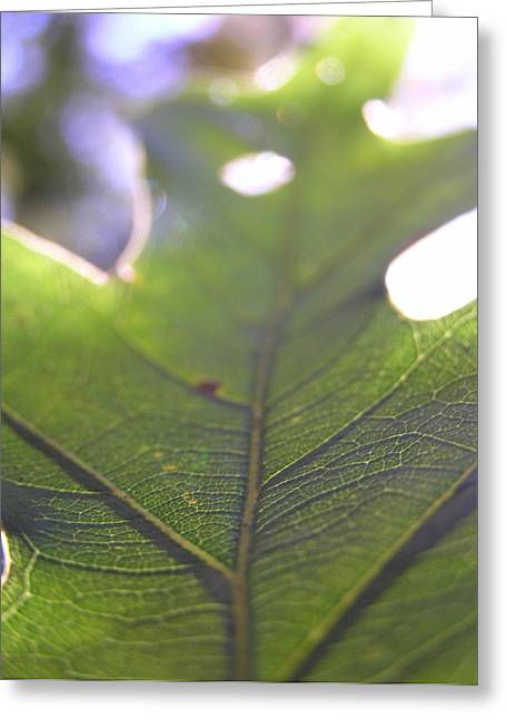 Backlit Greeting Cards - Backlit Leaf Greeting Card by Dustin K Ryan