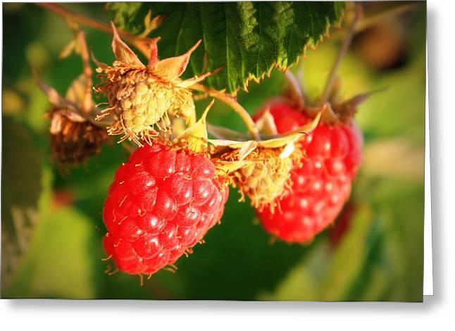 On The Vine Greeting Cards - Backyard Garden Series - Two Ripe Raspberries Greeting Card by Carol Groenen