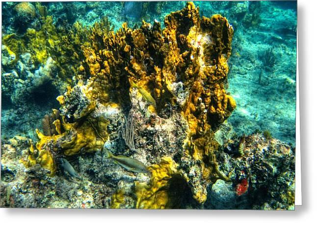 Reef Fish Greeting Cards - Bahamas 049 Greeting Card by Lance Vaughn