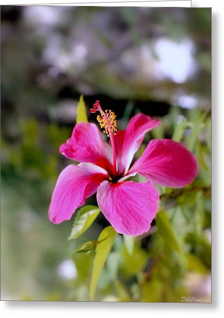 Flowers Stretched Prints Greeting Cards - Bahamian Flower Greeting Card by Deborah  Crew-Johnson