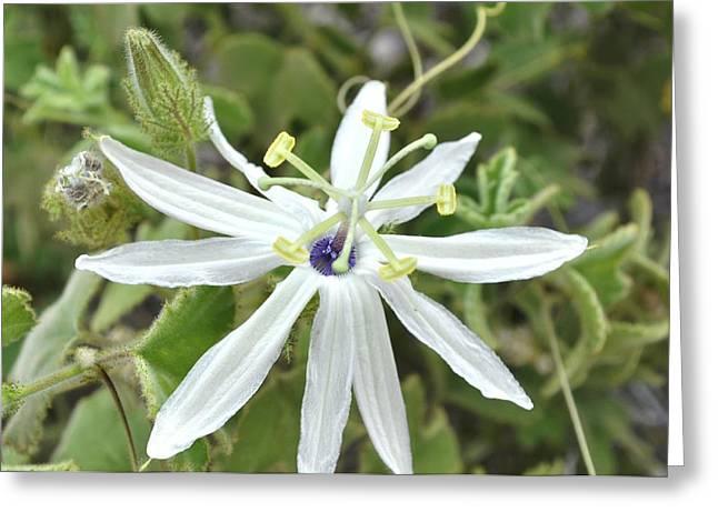 Baja Floral Greeting Card by Joseph Bundura