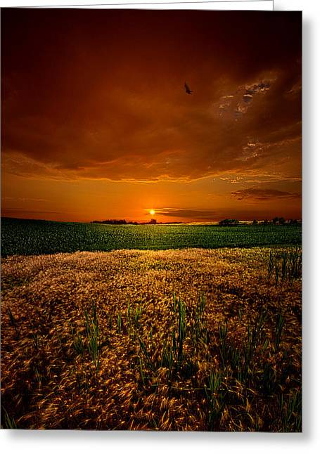 Earth Tone Photographs Greeting Cards - Balance Greeting Card by Phil Koch