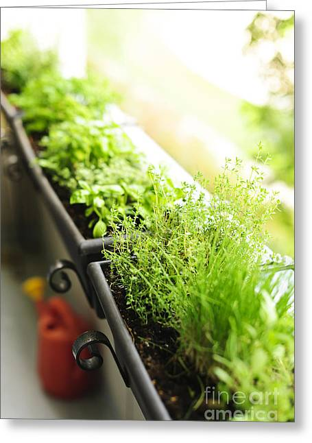 Organic Photographs Greeting Cards - Balcony herb garden Greeting Card by Elena Elisseeva