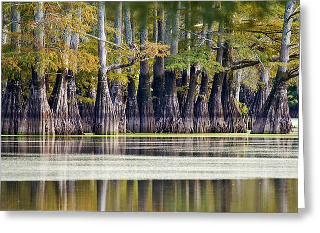 Jeka World Photography Greeting Cards - Bald Cypress Reflections Greeting Card by Jeff Rose