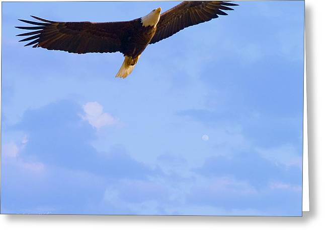 Masked Digital Art Greeting Cards - Bald Eagle - The Grand Master 2 Greeting Card by J Larry Walker