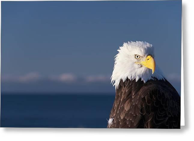 Animal Patriotic Art Greeting Cards - Bald Eagle Greeting Card by Gloria & Richard Maschmeyer