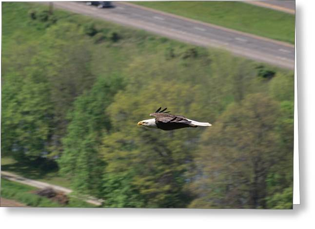 Finger Lakes Greeting Cards - Bald Eagle In Flight One Greeting Card by Joshua House