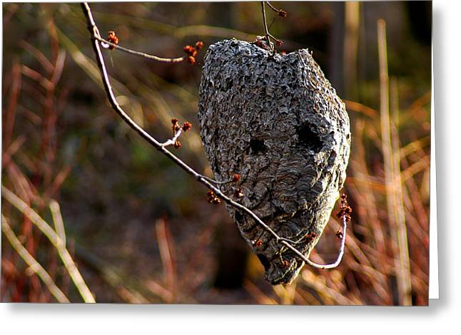 Bald Faced Hornet Nest  Greeting Card by LeeAnn McLaneGoetz McLaneGoetzStudioLLCcom