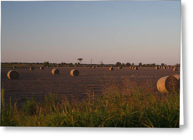 Bales In Peanut Field 1 Greeting Card by Douglas Barnett